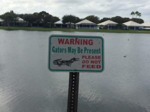 Yeah. I'm not going to be feeding any gators that show up...