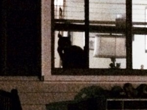 Either a new cat or a new neighbor with old cat.